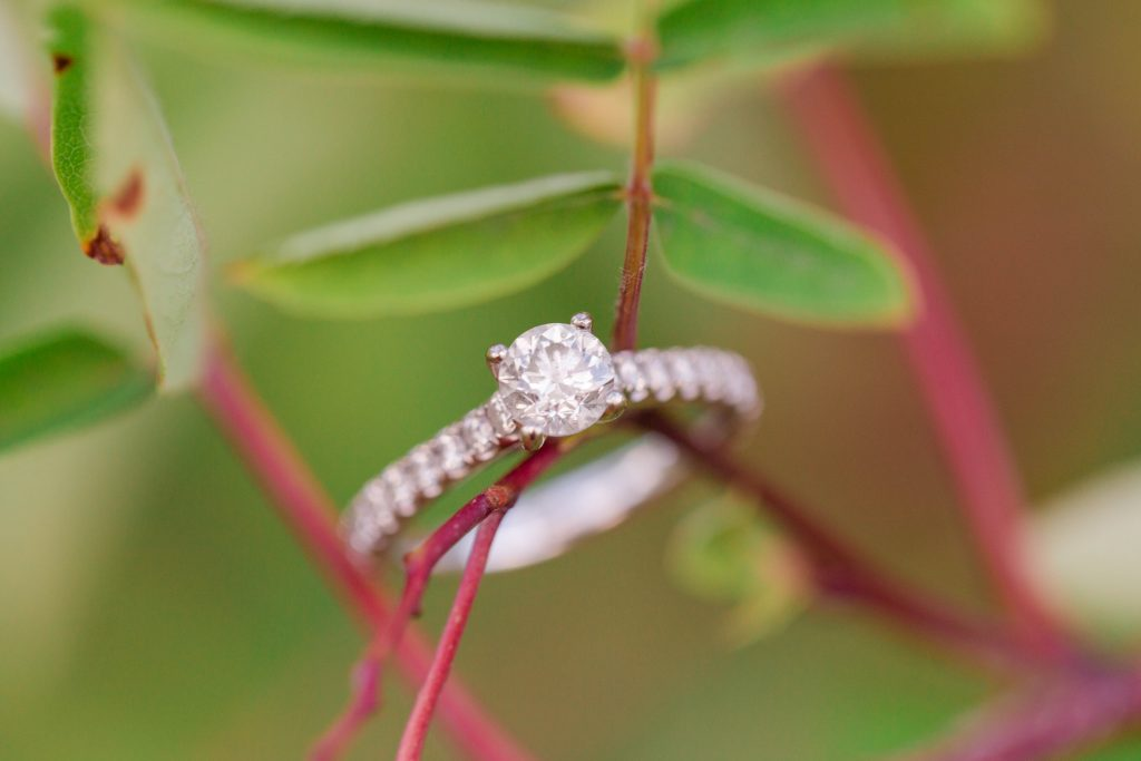 close up ring shot resting on a tree branch with pretty green leaves