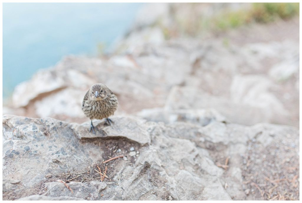 little bird standing on the rocks and clear blue water at lake minnewanka in banff jasper