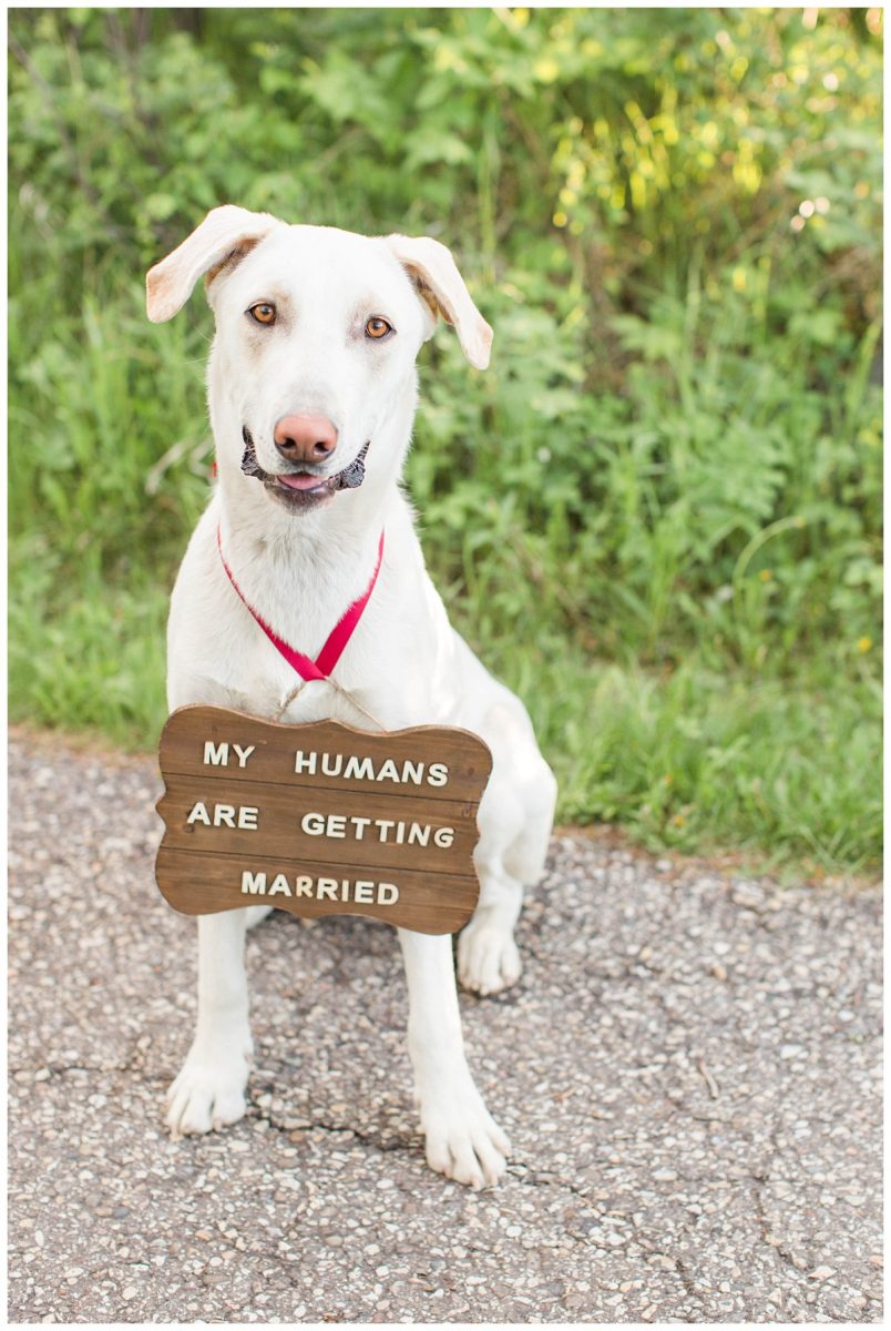 luke getting married sign dog photo