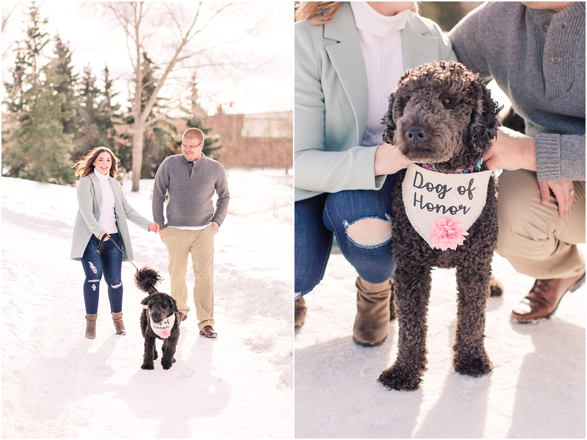 alberta dog photographer for engagement session walking on a path in the winter dog of honor